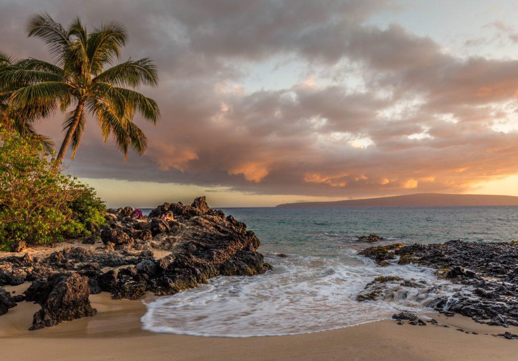 Küste mit Palmen