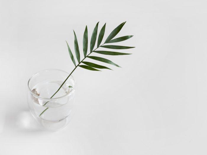Minimalismus - einzelner grüner Zweig